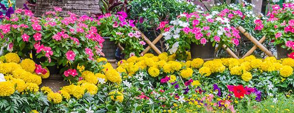 10 растений, которые цветут все лето, до самых морозов