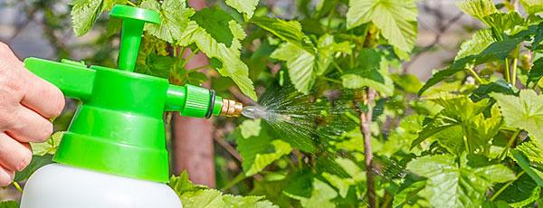 Чем обработать сад от болезней и вредителей: план мероприятий с весны до осени