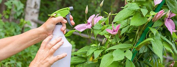 Что делать на даче в июне любителям садово-огородных дел