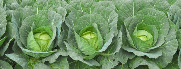 Что посадить на огороде в мае: полный список овощей