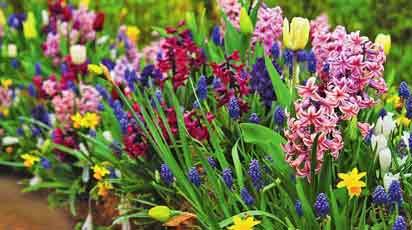 13 необычных луковичных цветов для весенней посадки