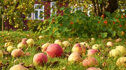 Топ-6 советов по уходу за садом после уборки урожая