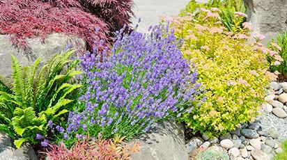 7 растений, которые отпугнут слизней и улиток с грядок
