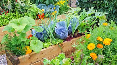 Десять советов начинающему огороднику