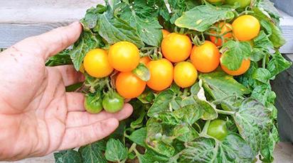 Огород на окне – какие семена посеять для выращивания в домашних условиях
