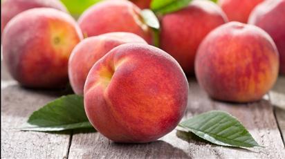 Как выращивать персики в северных регионах?