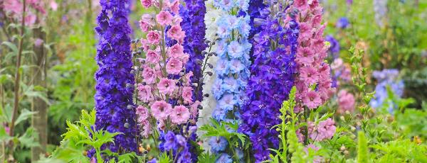 Как вырастить цветочный сад мечты из семян