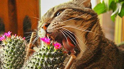 Как защитить растения от домашних животных: эффективные способы