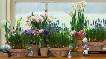 Какие цветы посадить осенью, чтобы зацвели к Новому году