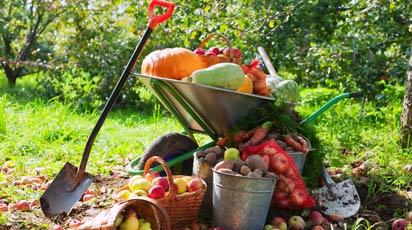Правильная подготовка к сезону рассады – гарантия большого урожая!