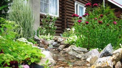 Растения для альпийской горки: ассортимент видов и сортов