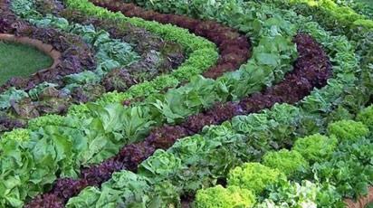 План севооборота, какие овощи можно или нельзя сажать рядом