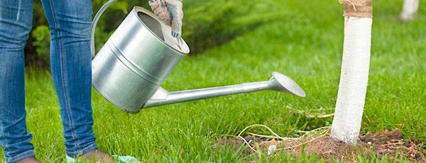 Как быстро подкормить деревья, кустарники в саду
