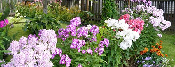 Какие цветы посадить в августе на клумбах и в саду