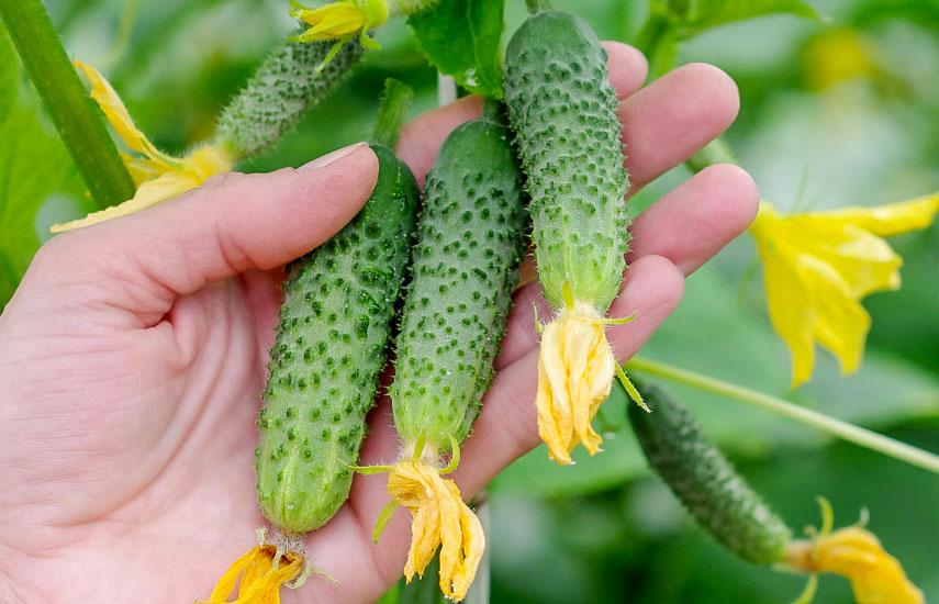Какие растения в марте нужно сеять на рассаду