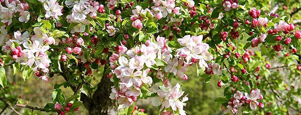 Календарь садовода и огородника на май: план работ