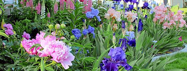 Клумба из многолетников непрерывного цветения: интересные варианты