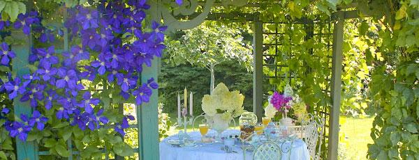 Лучшие вьющиеся многолетние растения для украшения сада