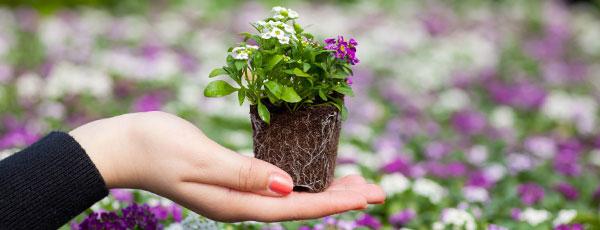 Перевалка — лучший щадящий способ пересадки растений