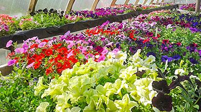 Способы стратификации семян – дома и на дачном участке