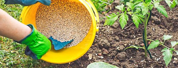 Весенняя подкормка сада и огорода — основы и способы