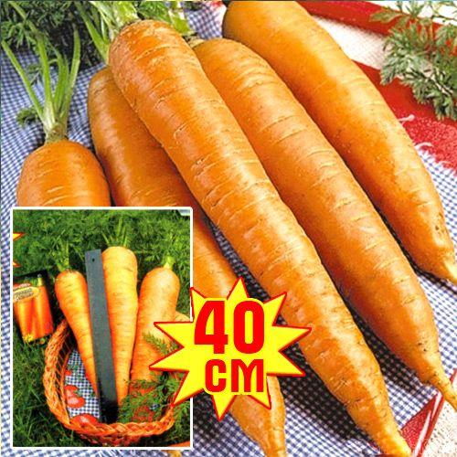 Морковь РР, семена изображение 1 артикул 7706