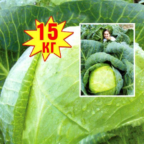 Капуста белокочанная РР, семена изображение 1 артикул 7702