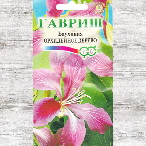 Баухиния Орхидейное дерево изображение 1 артикул 71132
