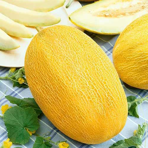 Дыня Сладкий ананас F1, семена изображение 1 артикул 65106