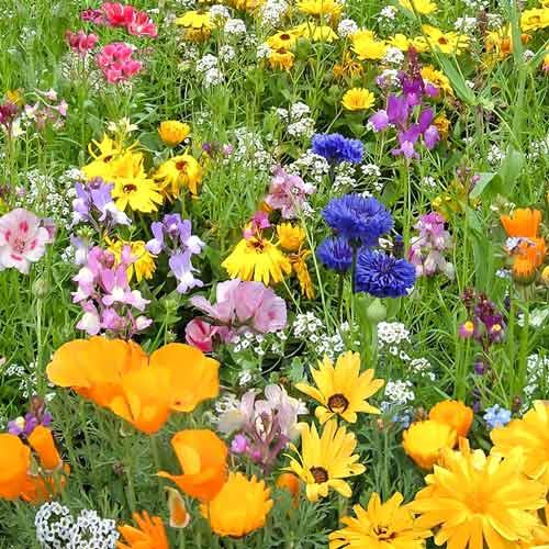 Газон цветущий Детская лужайка, смесь окрасок изображение 1 артикул 69863