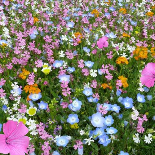 Газон цветущий Восточный орнамент, смесь окрасок изображение 1 артикул 69861