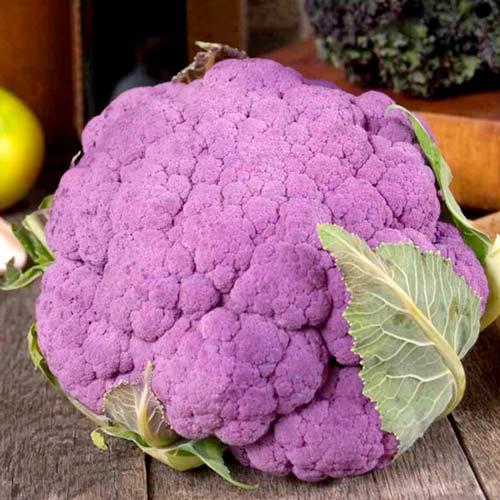 Капуста цветная Пурпурная головушка, семена изображение 1 артикул 80418С