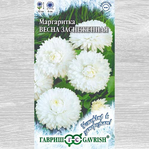 Маргаритка Весна заснеженная изображение 2 артикул 66097
