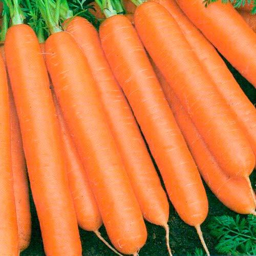 Морковь Балтимор F1 изображение 1 артикул 65733