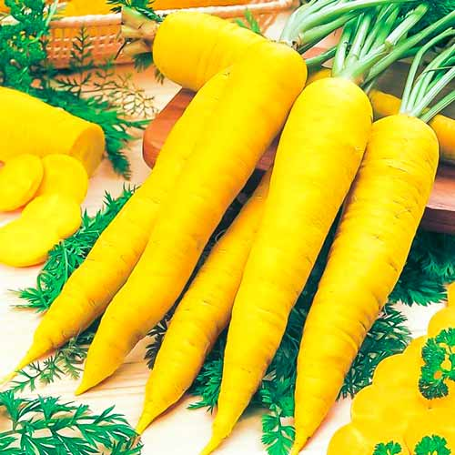 Морковь Чаровница золотая изображение 1 артикул 71623