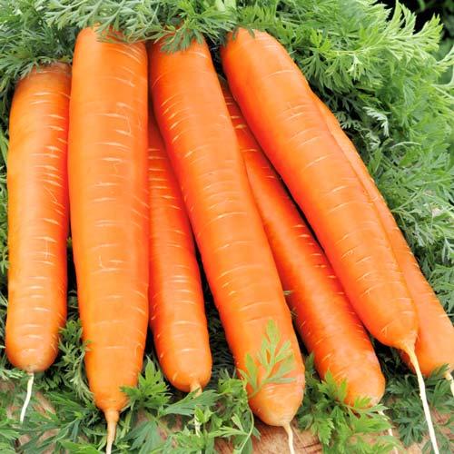 Морковь гранулир. Красный великан, семена изображение 1 артикул 19.3021Г