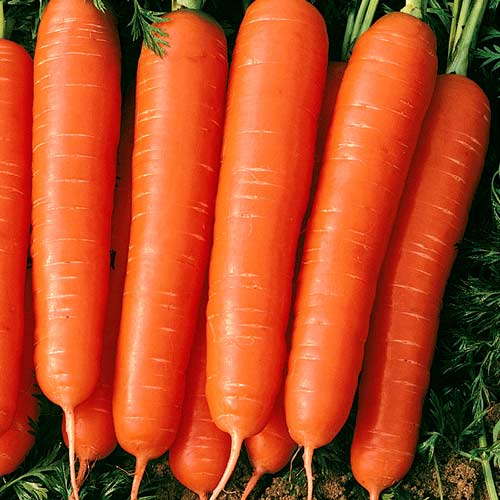 Морковь Мармелад красный изображение 1 артикул 65031