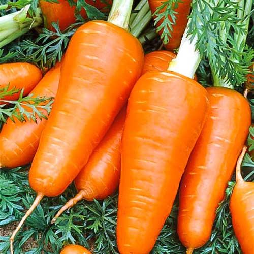 Морковь Ред Кор изображение 1 артикул 65736