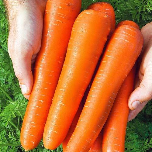 Морковь Русский Размер изображение 1 артикул 69906