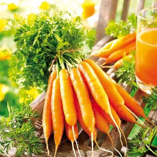 Морковь сахарная Лакомка F1 изображение 1 артикул 65346