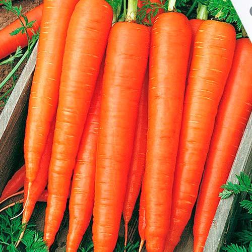 Морковь Санькина любовь F1 изображение 1 артикул 74184
