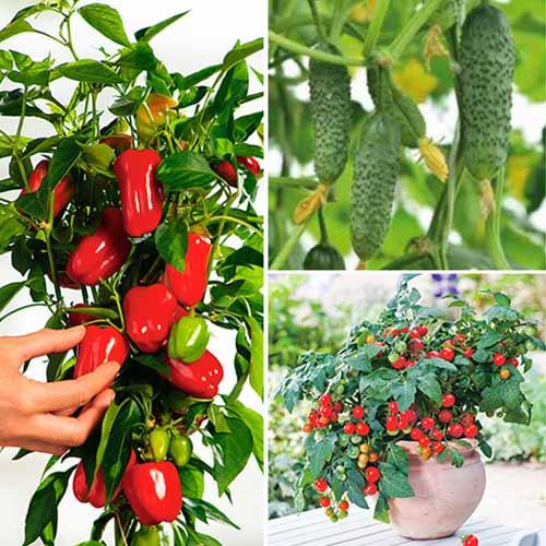 Набор Новогодний Урожай, смесь семян изображение 1 артикул 74188