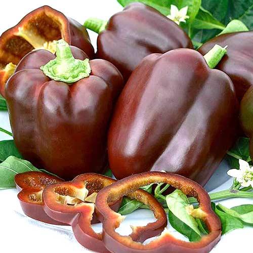 Перец Сладкий шоколад изображение 1 артикул 65403
