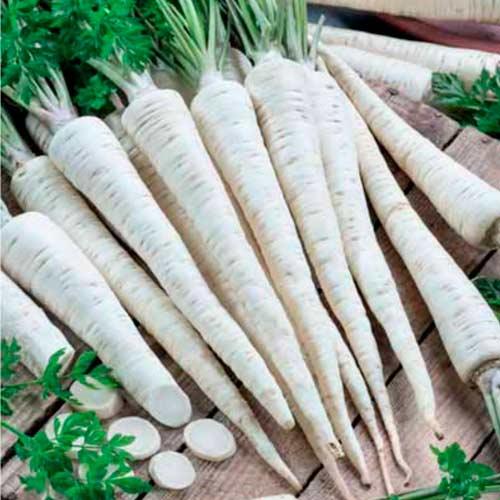 Петрушка корневая Урожайная изображение 1 артикул 65913