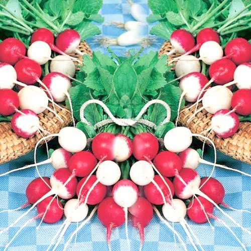 Редис Красное и белое изображение 1 артикул 74230