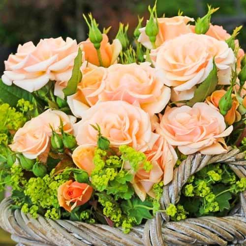 Роза флорибунда Свит Хоней изображение 1 артикул 2201