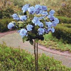Роза штамбовая Голубая изображение 1 артикул 2847