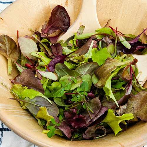 Салат Бейби Ливз цветной, смесь семян изображение 1 артикул 65353