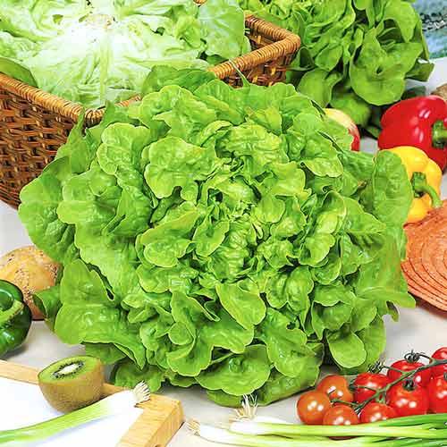 Салат маслянистый Изумительный изображение 1 артикул 65355