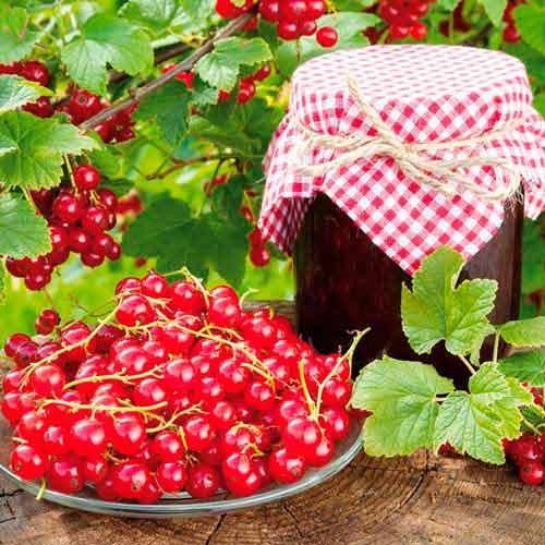 Смородина красная Ровада изображение 2 артикул 7570